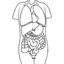 Medical Sketches